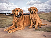 Joanne Graham's All Other Sporting Dog Breeds Gallery